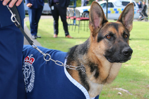 sunlive bay set to get new police dogs the bay 39 s news
