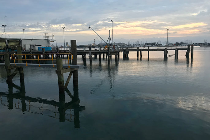 Sunlive a perfect day for fishing the bay 39 s news first for What time will the fish bite today