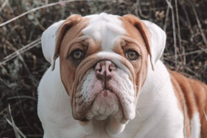 Te Puke man offers $5k reward for beloved dog