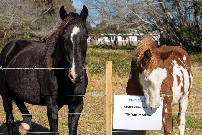 Council: You have a week to collect your horses
