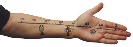 """3c1b52696 How often do we need a ruler, but just don't have one """"to hand"""", so to  speak?"""